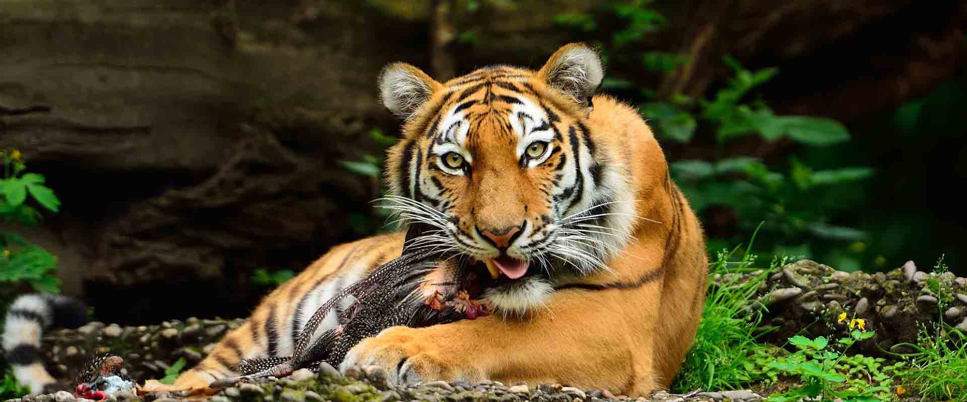 Explore the Golden Triangle Tour with Wildlife